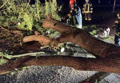 04.05.2021: Sturmeinsatz: Baum auf Fahrbahn